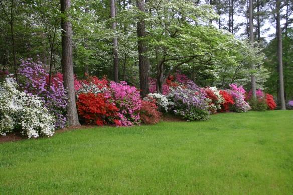Whites' Azalea Garden