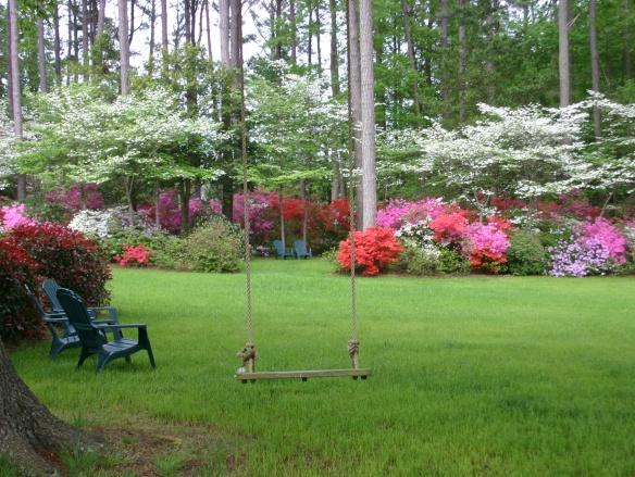 Whites' azaleas