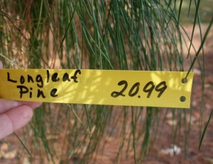 Great prices for 10' longleaf pine!