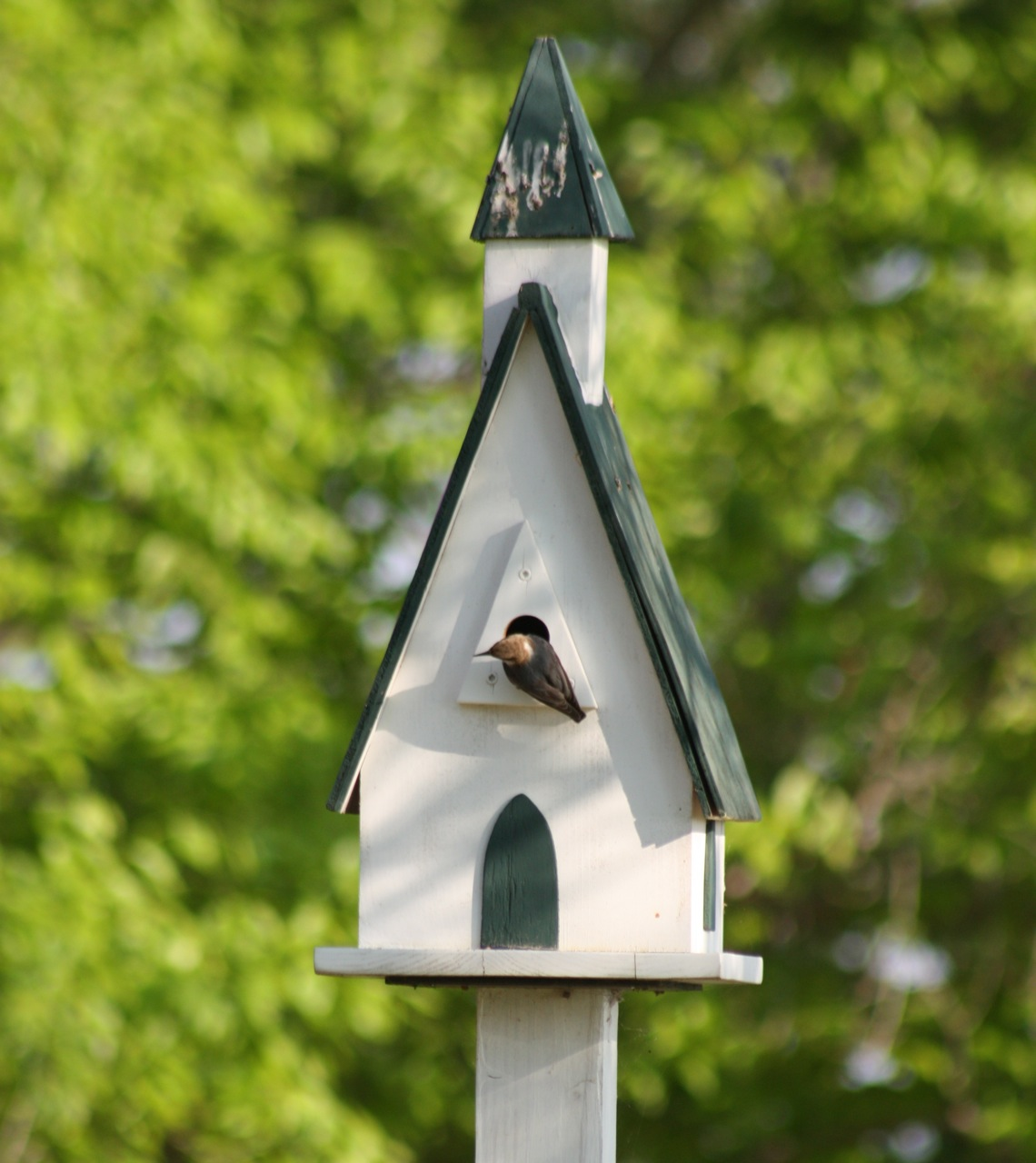 Decorative Victorian Bird Houses