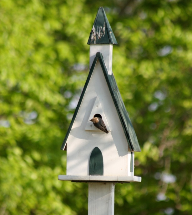 bluebird house plans audubon
