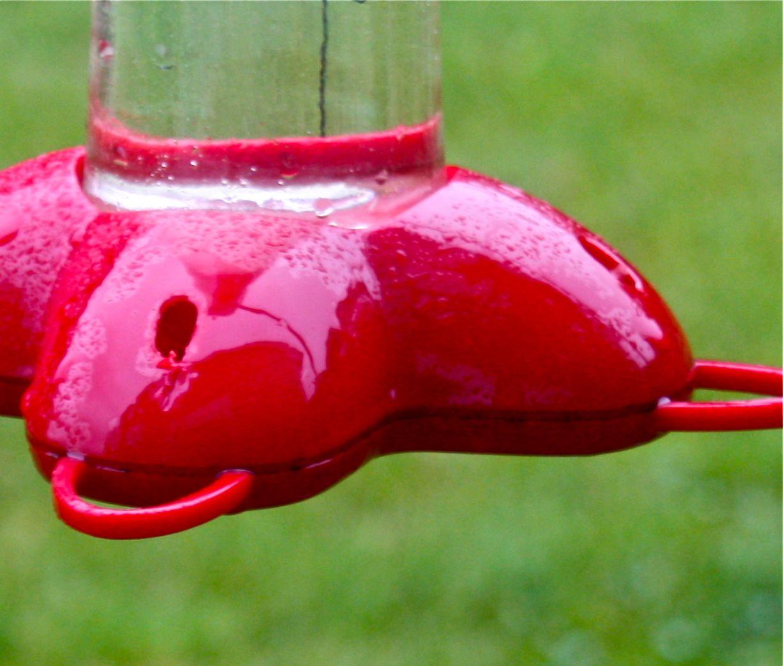Chickadee Hummingbird Feeder All Hummingbird Feeders