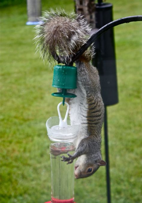 Download Homemade Squirrel Proof Bird Feeders Plans Diy