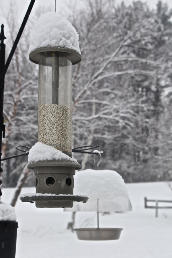 Snow on Feeder