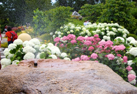 Mist sprayed from several boulders in the children's garden to cool off on a hot summer day.