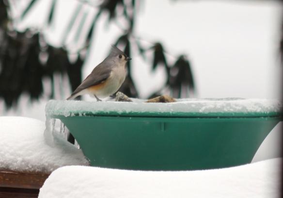 heated birdbath