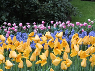 Keukenhof in Holland