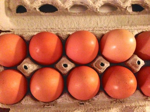 Golden Comet eggs