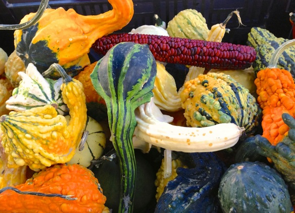 gourds at Rolling Green Nursery