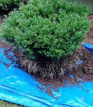 Transplanting Tide Hill box