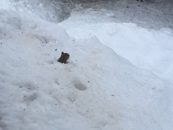 """snow"" squirrel"