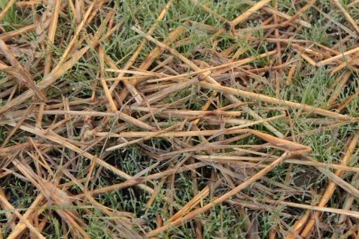 grass-seed