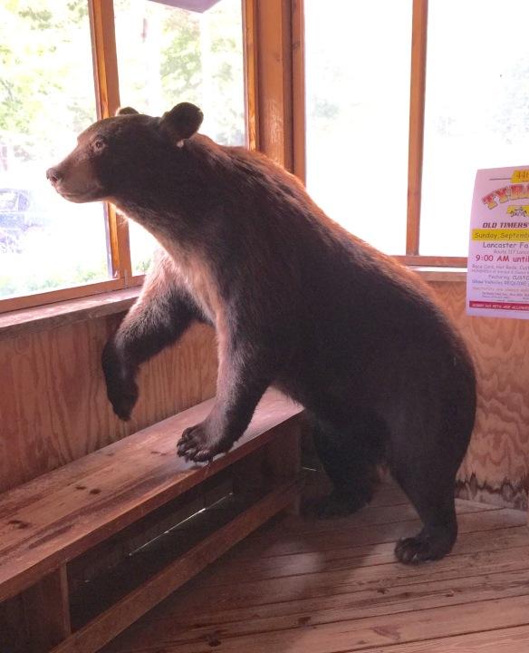 Stuffed Bear at a Restaurant