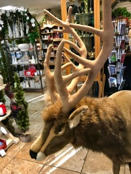 Not Rudolph, but maybe Prancer...