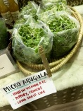 Arugula (I bought!)
