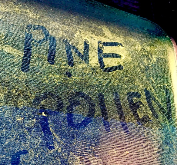 Pine Pollen 2017