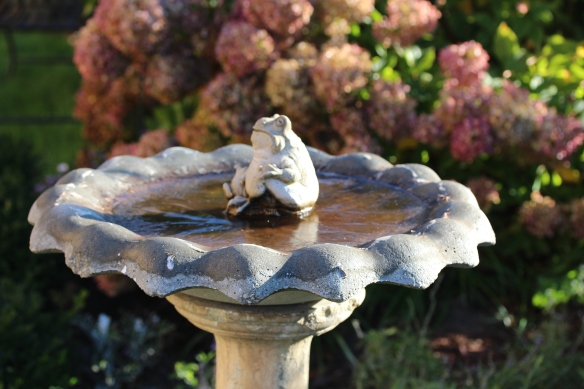 Ice on the birdbath, October 2017