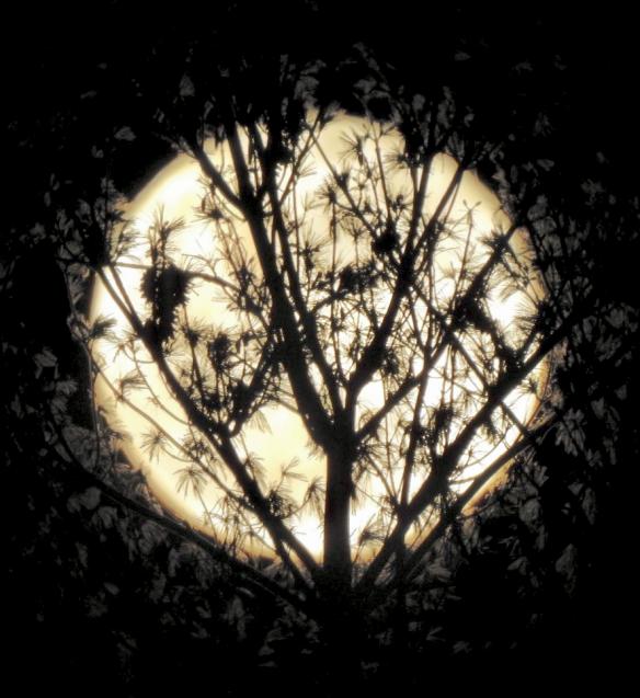 moon1:2018