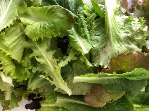 lettuce 2018