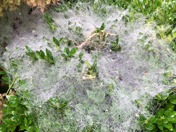 grass spider 2018