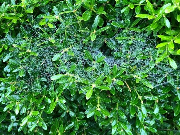 spider web 2018
