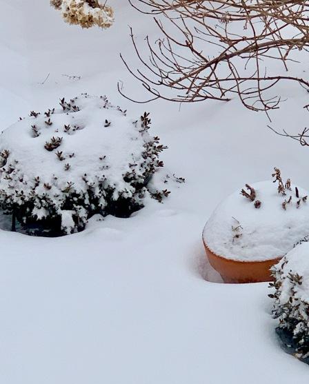 snow Feb 2019