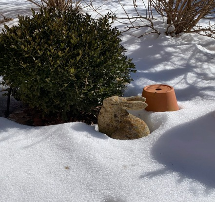 Bunny Feb. 2019