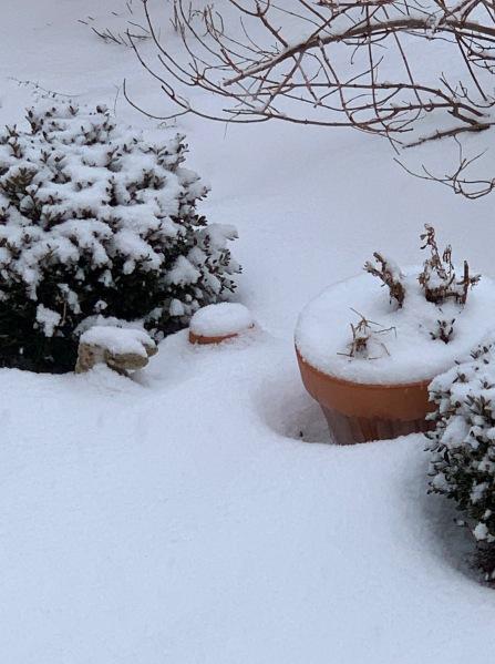 Snow Feb. 2019